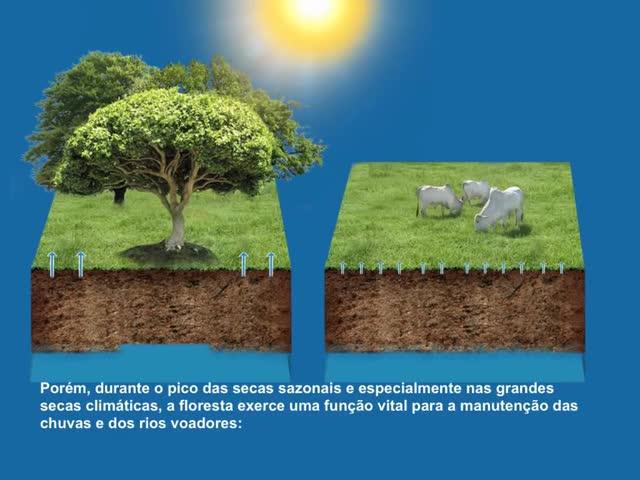 Watch and share Evaporação Da Floresta Comparada Ao Pasto GIFs on Gfycat