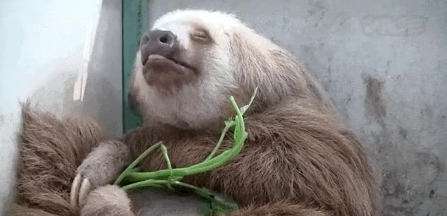 Watch and share Facebook/Sloth Sanctuary Costa Rica GIFs on Gfycat