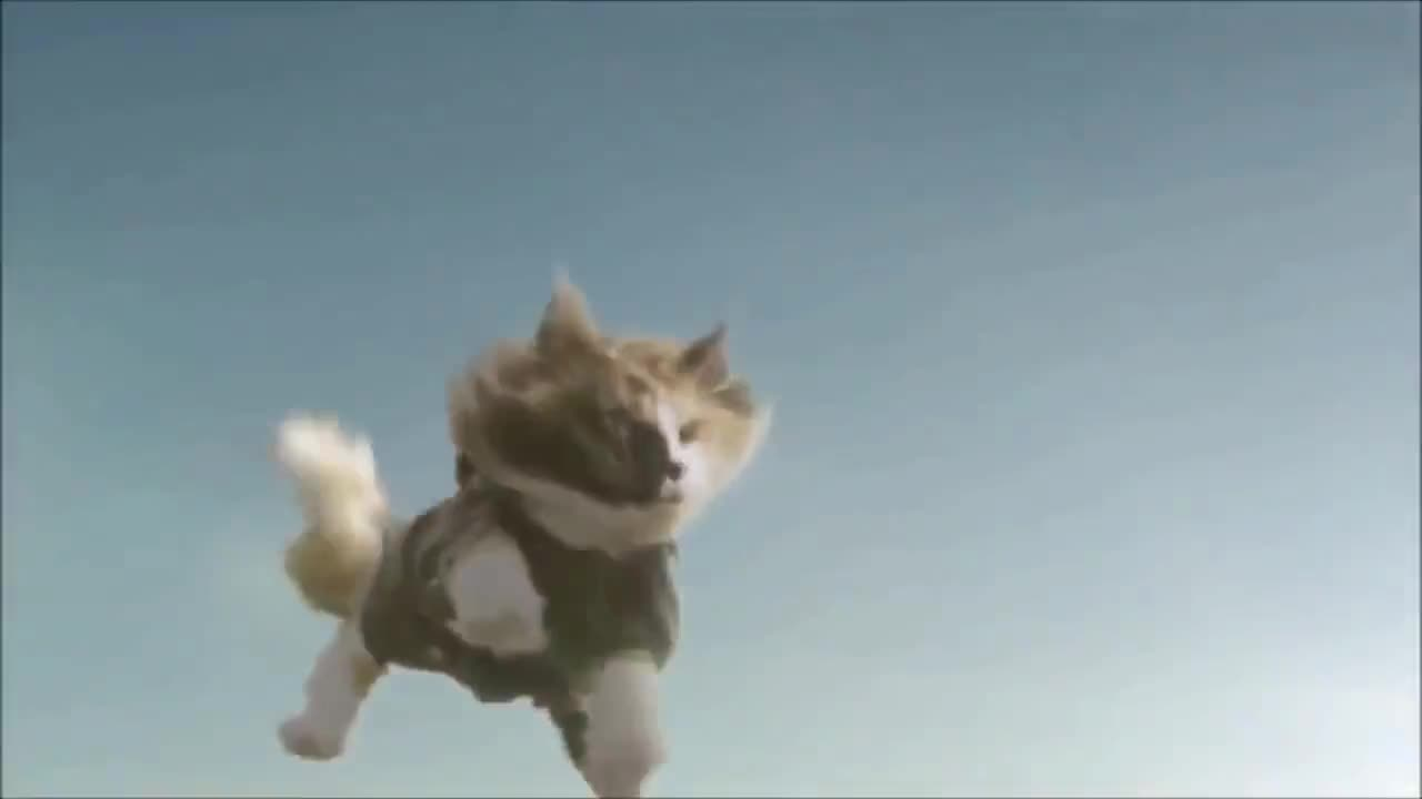 Skydiving Cats GIFs