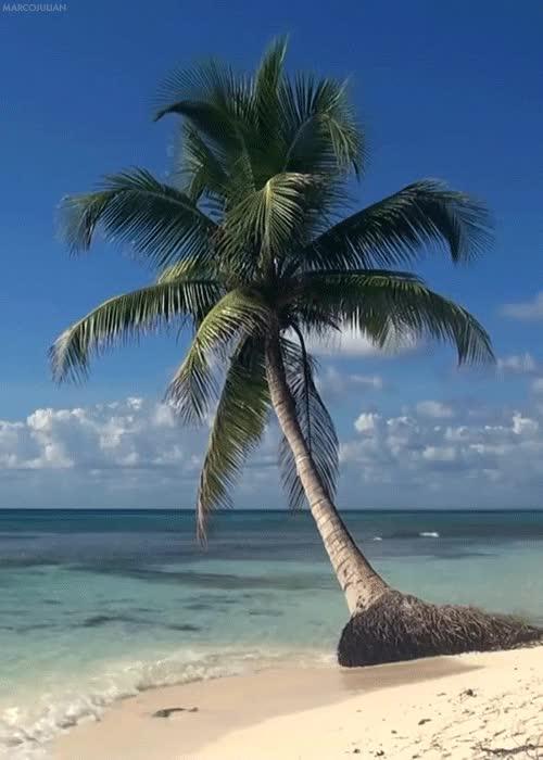 Гиф море пляж пальмы