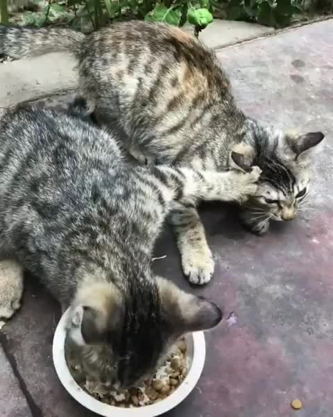 happy cat club, happycatclub, 📽 by M_1116 | DY 😑😑😑😑😑 ~ double tap ❤❤ . 🐱🐱Follow my other pages 👉 @happypetclubs 👉 @lovecatdaily GIFs