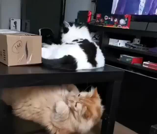 cats, touched GIFs