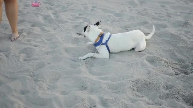 Ziggy at the Beach