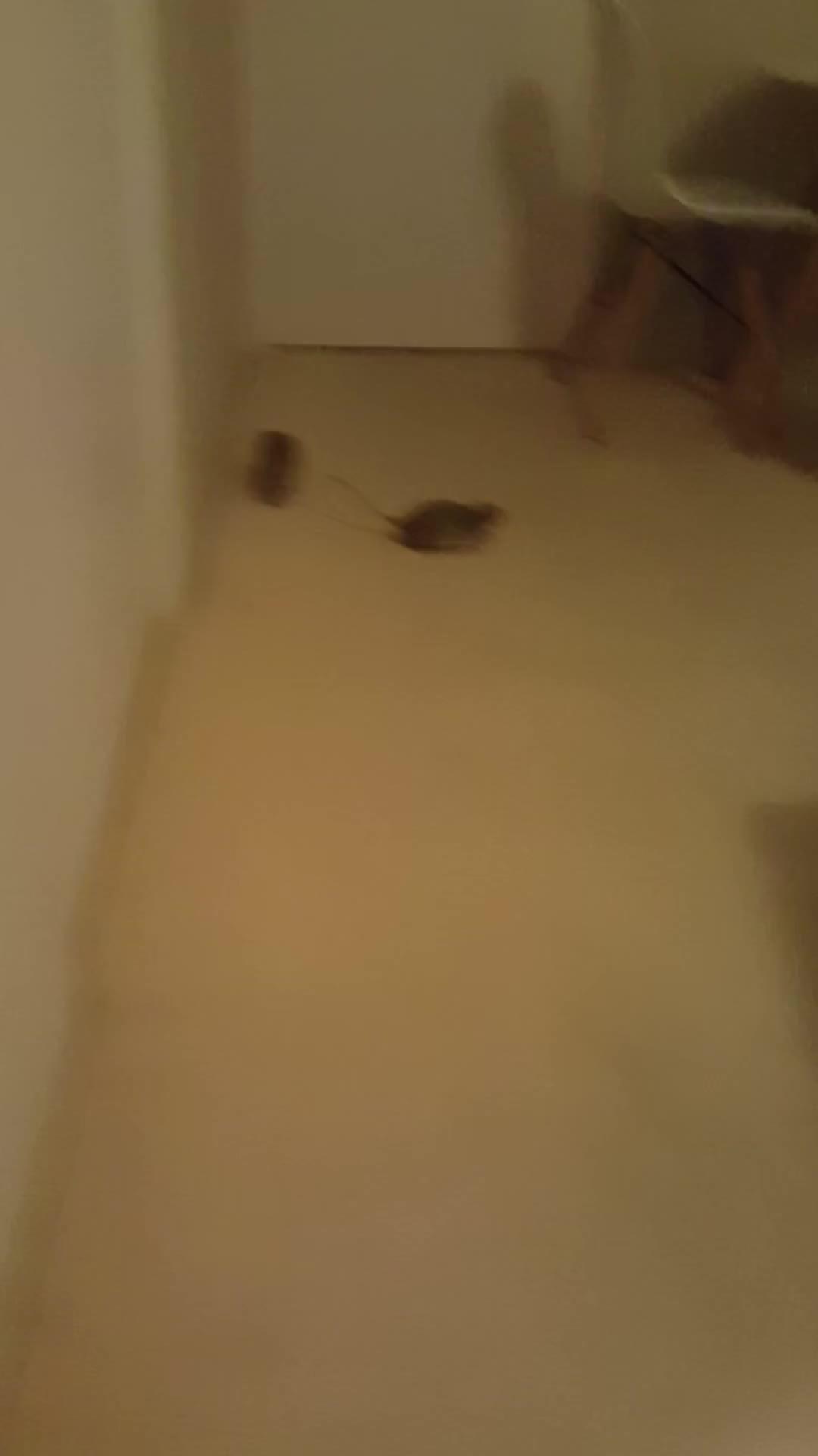 r/RATS Gifs (Reddit Gallery) - Scrolller