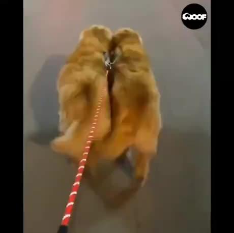 Sync walk GIFs