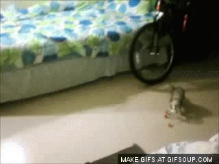 Watch and share Roo GIFs on Gfycat