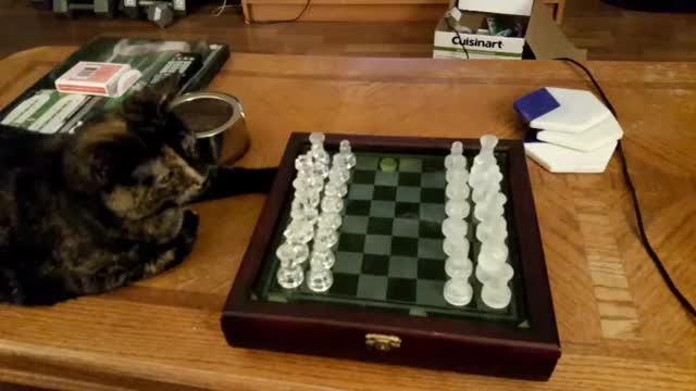 Watch this staffpicks GIF on Gfycat. Discover more chess, funny GIFs on Gfycat