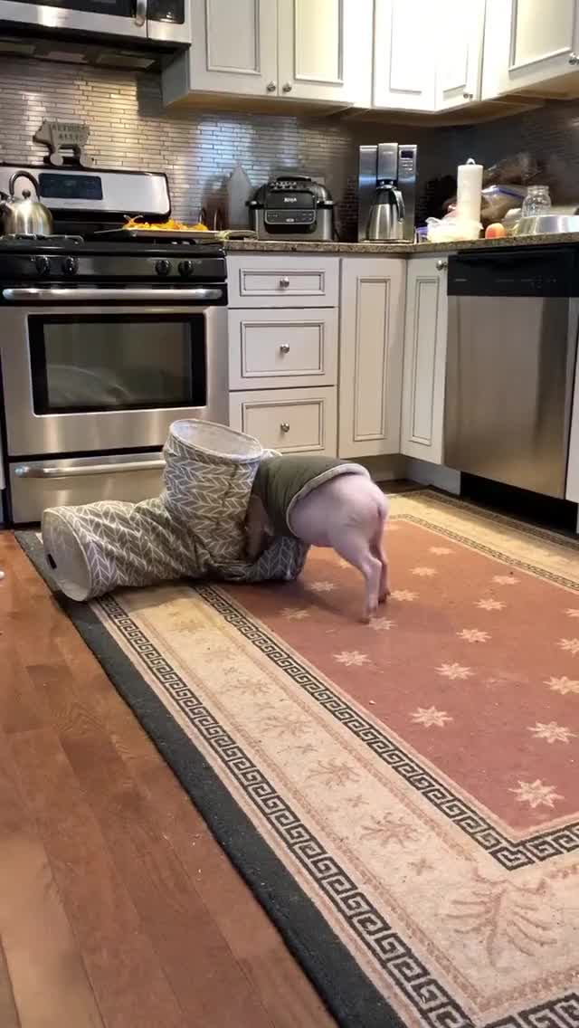 Watch and share Pigs Playing GIFs and Playful Pig GIFs by lnfinity on Gfycat