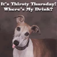 Watch and share Thirsty Thursday GIFs on Gfycat