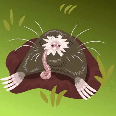 Watch and share WTF Evolution: Star-nosed Mole By Amkili GIFs on Gfycat