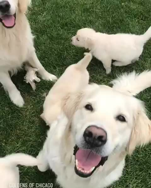 dog, proud parents with their puppers GIFs