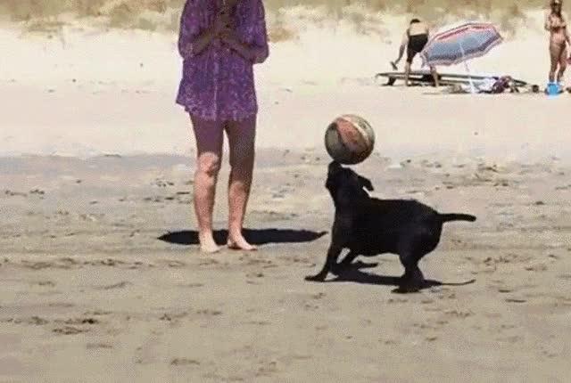 Watch CACHORRO HABILIDOSO GIF by Blog do Barba (@barbanegra88) on Gfycat. Discover more animals, ball, beach, bola, cachorro, dog, habilidade, trick GIFs on Gfycat