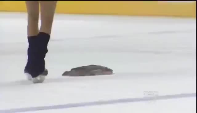 Watch Predators catfish GIF on Gfycat. Discover more related GIFs on Gfycat