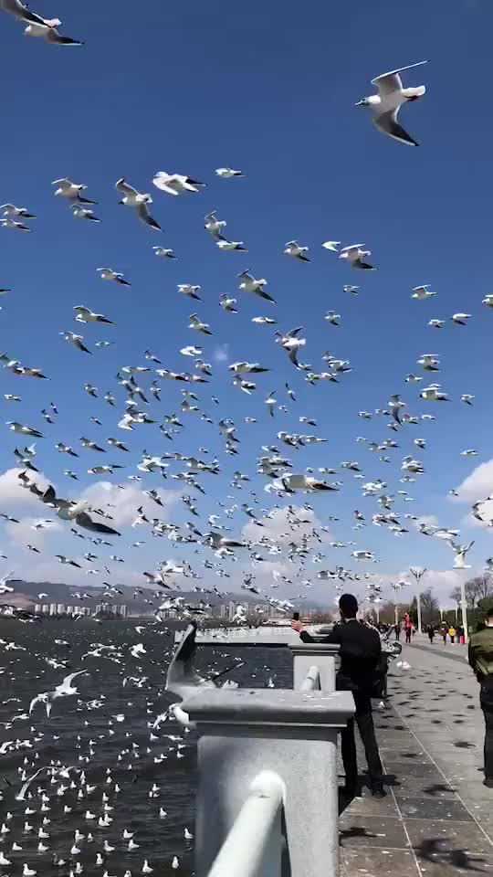 Watch and share Birds Flying Over A Bridge GIFs on Gfycat