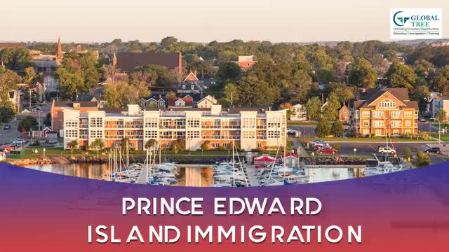 Watch and share Pei Pnp GIFs by Study Abroad & Immigration on Gfycat