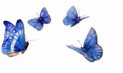 Watch and share Butterflies GIFs on Gfycat