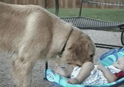 funny dog dog and baby GIFs