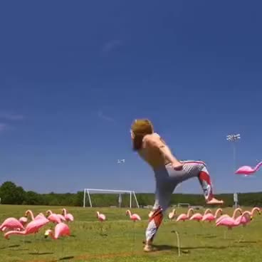 Watch and share Bodybuilder Kicking A Bunch Of Plastic Flamingos GIFs on Gfycat
