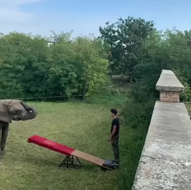 Watch and share Elephant Jump GIFs on Gfycat