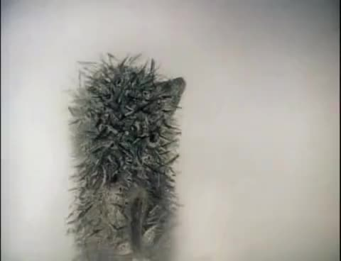 Watch and share Hedgehog Fog GIFs on Gfycat