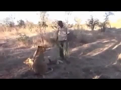 Break dancer rushes to help lion with stomach ache