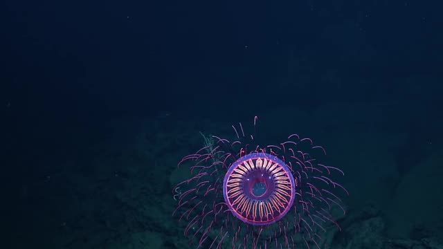 Watch and share Ocean Exploration GIFs and Marine Biology GIFs on Gfycat