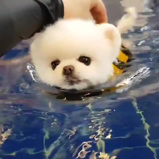 Watch His first swimming lesson GIF on Gfycat. Discover more nchndmld GIFs on Gfycat
