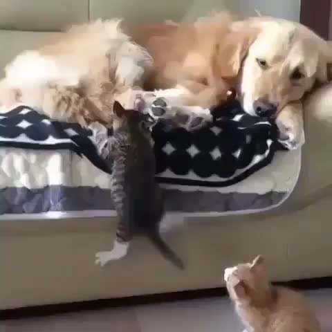 Watch and share Kittens GIFs and Dog GIFs by Master1718 on Gfycat