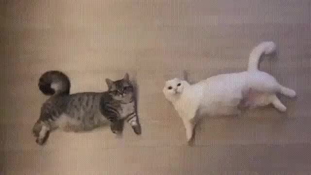Watch stretchy GIF on Gfycat. Discover more related GIFs on Gfycat