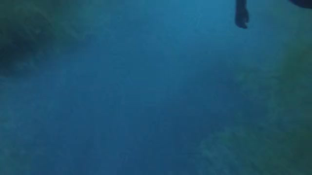 Watch and share Scuba Sulfur GIFs by Spencer Smith on Gfycat