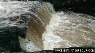 Watch and share Salmon Jumping GIFs on Gfycat