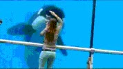Watch Orca GIF on Gfycat. Discover more related GIFs on Gfycat