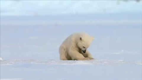 Watch and share Seal Accidentally Scares Baby Polar Bear 😂 GIFs on Gfycat