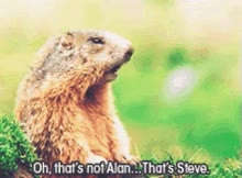 Watch Oh That's Not Alan...That's Steve. GIF on Gfycat. Discover more related GIFs on Gfycat