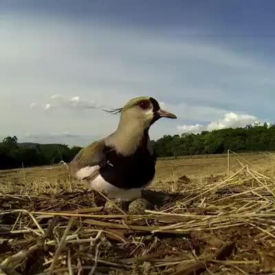bird mother saved herkids, mylinkconverter.com, This is super cute GIFs