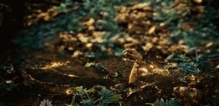 Mushrooms GIFs
