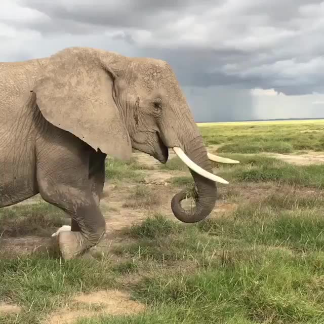Watch wild elephants GIF by PM_ME_STEAM_K3YS (@pmmesteamk3ys) on Gfycat. Discover more related GIFs on Gfycat