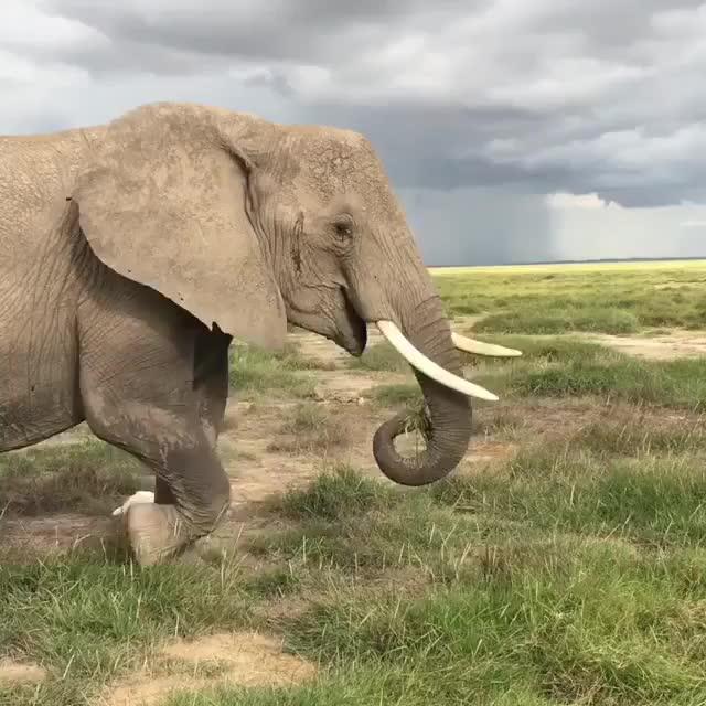 wild elephants GIFs