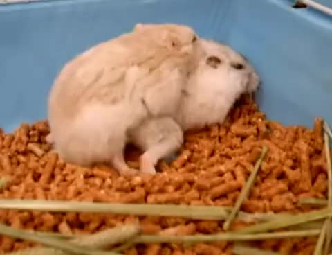 Watch and share Hamster GIFs and Orgasm GIFs on Gfycat