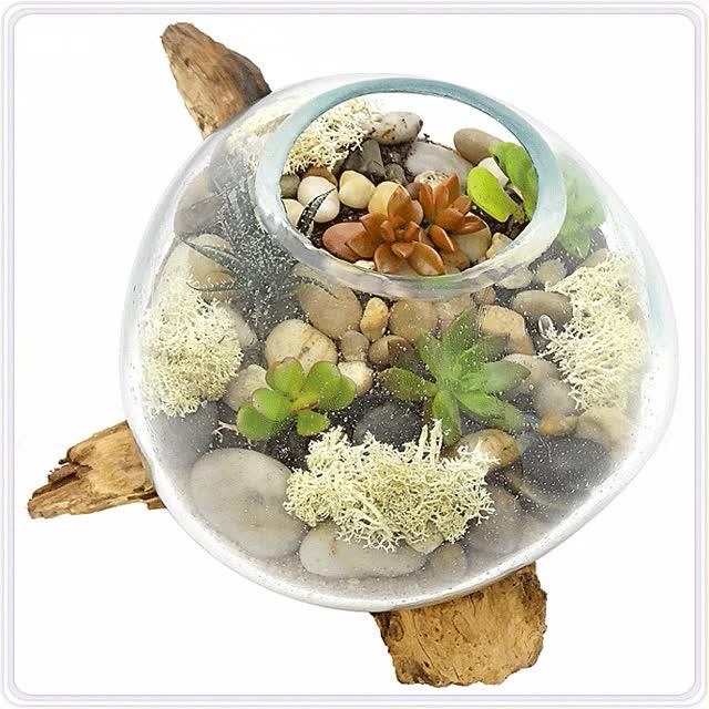 Watch and share Bl Java Satu Succulent GIFs on Gfycat