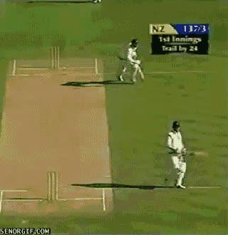 cricket, cricket GIFs