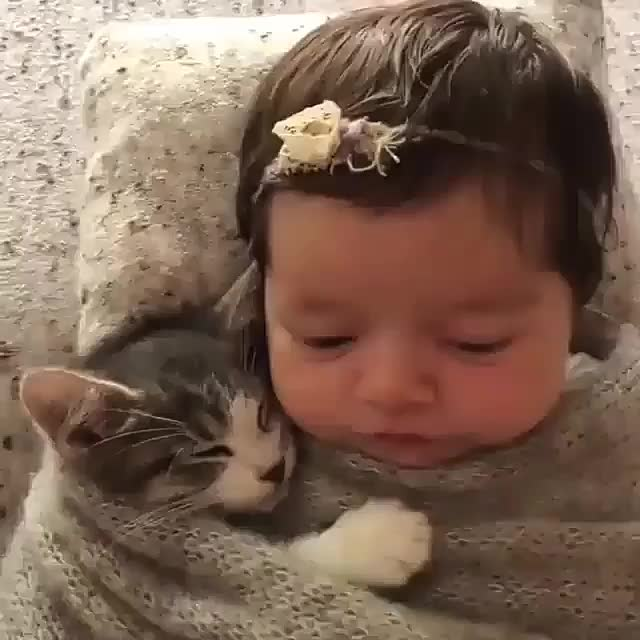 Purrito with a baby! (reddit) GIFs
