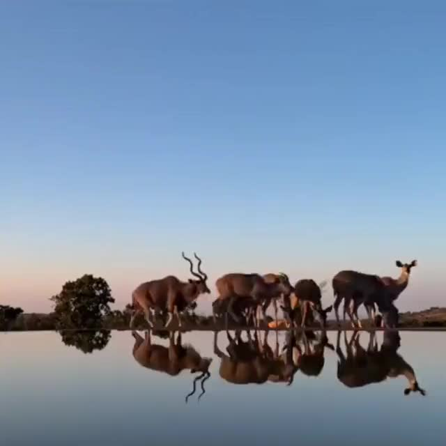 """Watch and share Time-lapse Of Animals Visiting African Watering Hole Is Basically """"The Lion King"""" In Real Life GIFs by MyNameGifOreilly on Gfycat"""