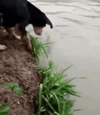 Watch Creative interesting Title. GIF by Vlad Hihaev (@vladhihaev) on Gfycat. Discover more Dog, Funny, fisherman, lucky GIFs on Gfycat