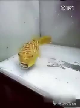 Watch and share Fish GIFs by The Livery of GIFs on Gfycat