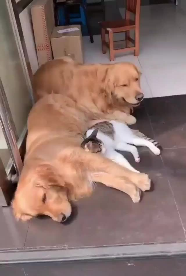Watch and share Dogs GIFs and Cat GIFs on Gfycat