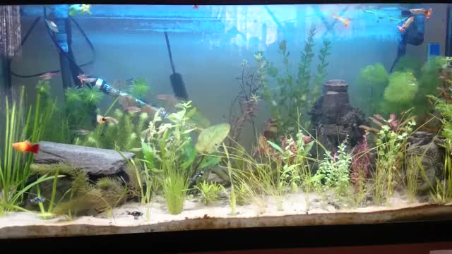 Watch and share New Plants And New Fishies GIFs on Gfycat