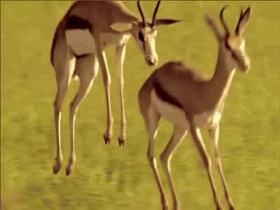Watch and share Datamosh GIFs and Animals GIFs by Ĝ̸͇͋̉̍̓́͝litch C̵̲̗̲̱̏͋̆̕͜ity on Gfycat
