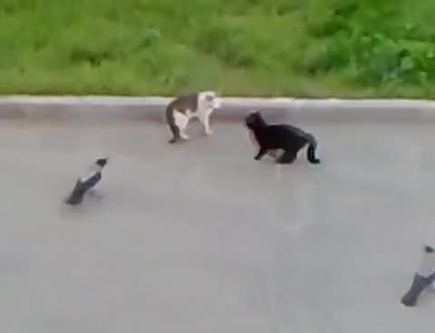 Watch and share Cat Fight GIFs on Gfycat