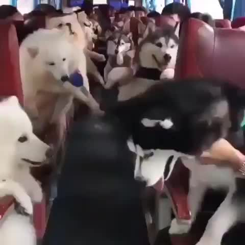 Watch and share Dogs GIFs by Master1718 on Gfycat